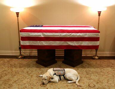 To zdjęcie poruszyło internautów. Pies George'a H. W. Busha czuwa przy...