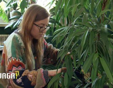 """Uwaga! TVN: Tworzą domowe dżungle. """"Za te pieniądze mogłabym kupić auto"""""""