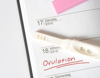 Test owulacyjny pomaga zajść w ciążę. Jak działa?