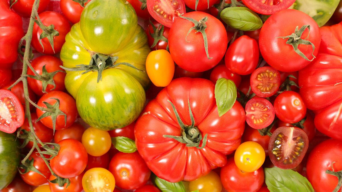 Pomidory Zdjęcie ilustracyjne
