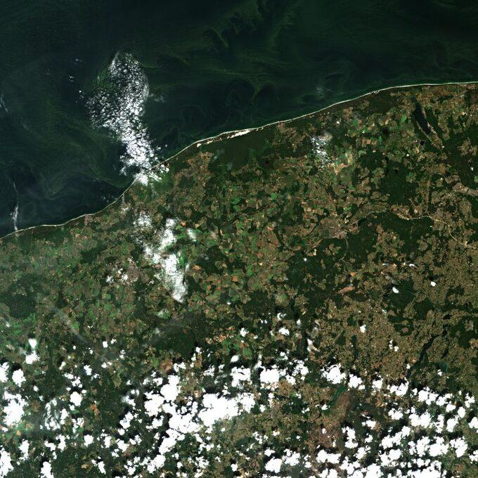 Widok satelitarny napolskie wybrzeże z29 czerwca. Widoczne zielone sinice