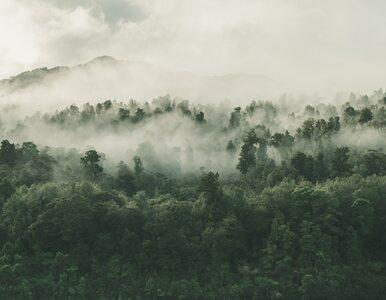 UKSW i BOŚ będą współpracować na rzecz ochrony środowiska
