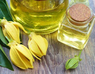 Olejek ylang ylang pomaga pozbyć się stresu i nie tylko. Co jeszcze...