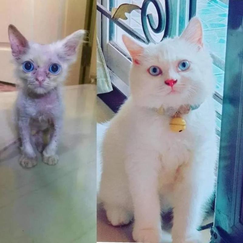 Aż trudno uwierzyć, że to ten sam kot!