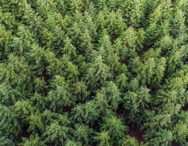 Fundacja ORLEN: Tysiąc drzew za każdy rok działania