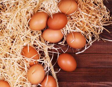 Czym jaja ekologiczne różnią się od zwykłych?