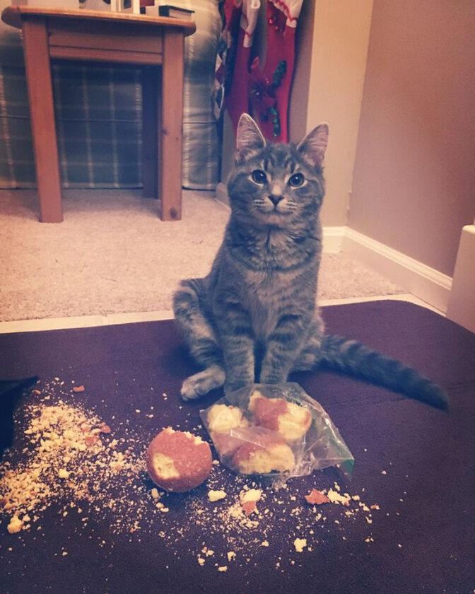 Fajne mieliście muffinki