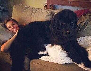 Te psy chyba nie zdają sobie sprawy, jak wielkie są. Efekty? Komiczne!