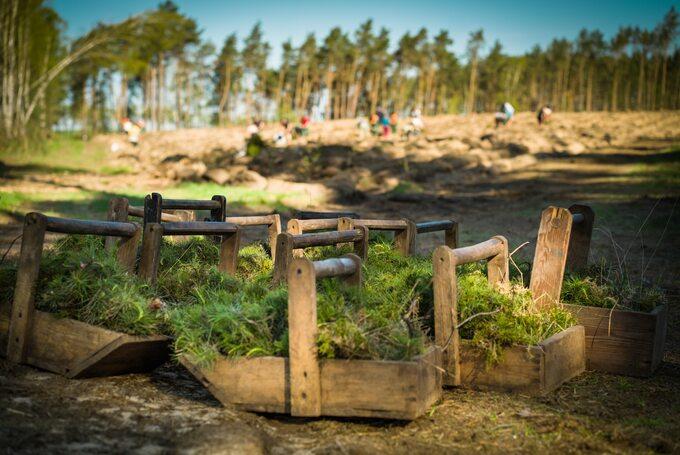 Odnowienia lasu
