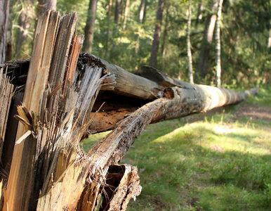 Łatwiej będzie pozbyć się niechcianych drzew i krzewów ze swojej...