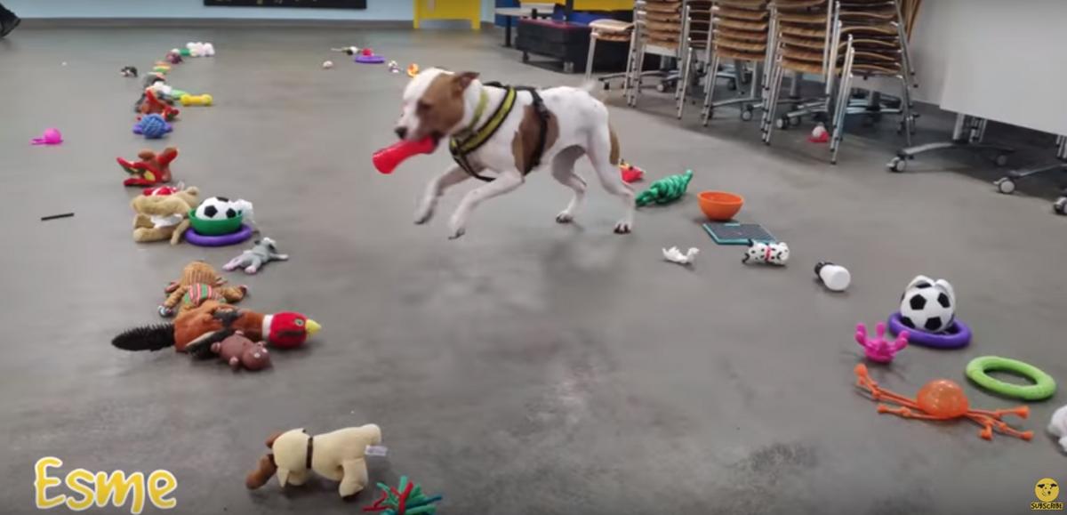 Psy same wybierały świąteczne prezenty