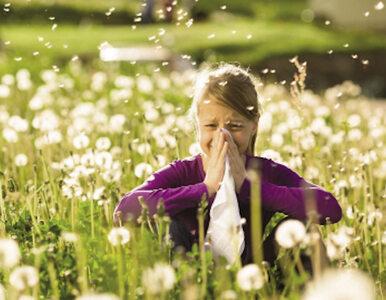 Kalendarz pylenia roślin, czyli co każdy alergik wiedzieć powinien