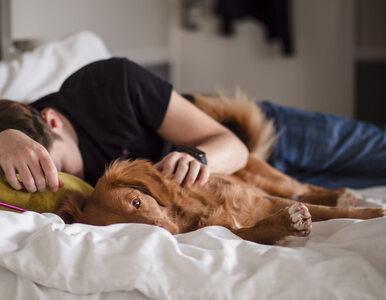 Spanie ze zwierzętami wpływa na jakość snu? Te badania mogą zaskoczyć