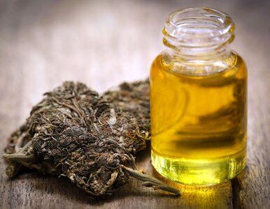 Medyczna marihuana zabija komórki rakowe? Nowe badania