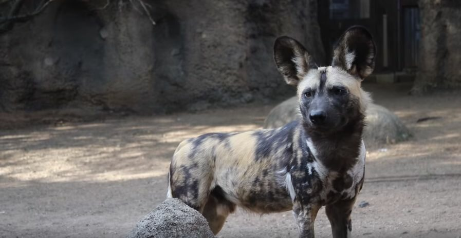 Wizyta zwierząt ze schroniska w zoo