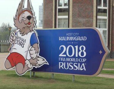 """Rosjanie trują bezdomne psy, by """"oczyścić"""" ulice przed mundialem?..."""