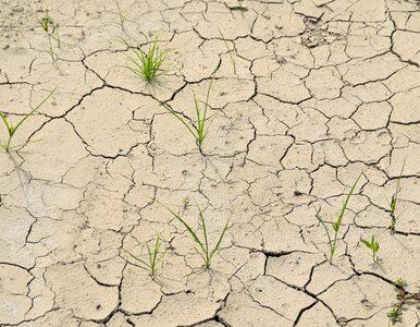 Etiopia umiera z pragnienia. 2 mln ludzi bez dostępu do wody