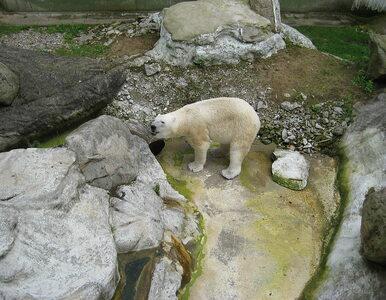 Drastyczny plan kryzysowy w niemieckim zoo. Jednymi zwierzętami chcą...