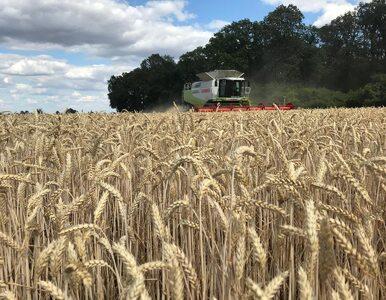Duże też piękne – rolnictwo zrównoważone w gospodarstwach...