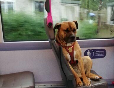 Pies samotnie jechał autobusem. Jego zdjęcie stało się hitem sieci