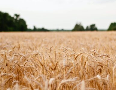 Rolnicy walczą ze skutkami pandemii. Problemem susza, zerwanie łańcuchów...