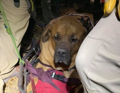 Z 90-kilogramowym psem w góry. Wyprawa nieomal zakończyła się tragedią