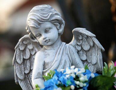 Polka z Wiednia: W mieście jest cmentarz dla dzieci, które się nie...