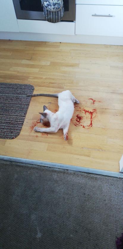 Kot, który przyprawił właściciela o zawrót głowy!