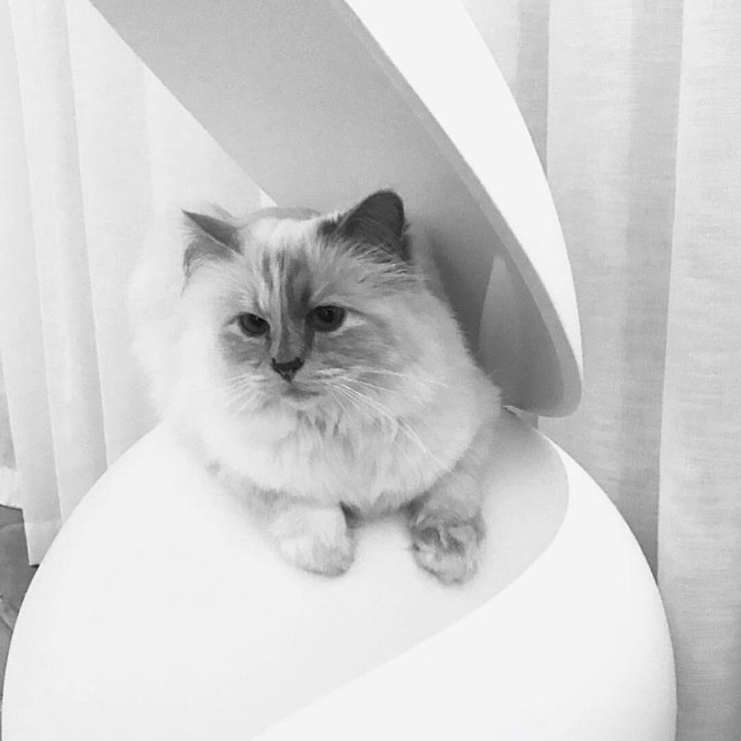 Choupette. Kotka Karla Lagerfelda