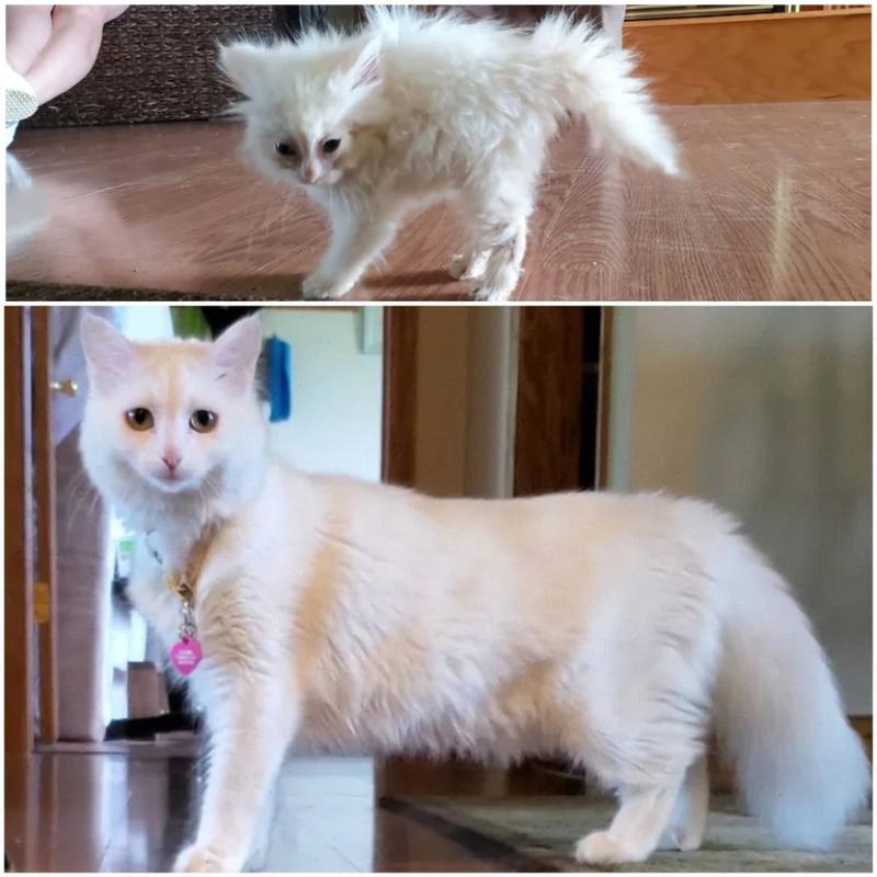 Mały, wystraszony kot zamienił się w dumnego zwierzaka