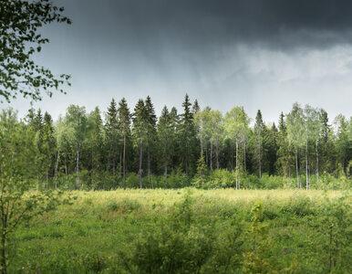 W lasach bez maseczki. Ministerstwo Środowiska wydało komunikat