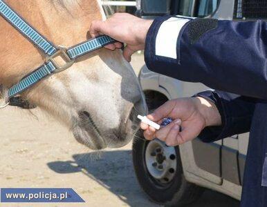 Policja przekonuje - koń lepszy niż narkotesty