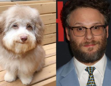 """Pamiętacie psa z """"ludzką mimiką""""? Internauci twierdzą, że jest podobny..."""