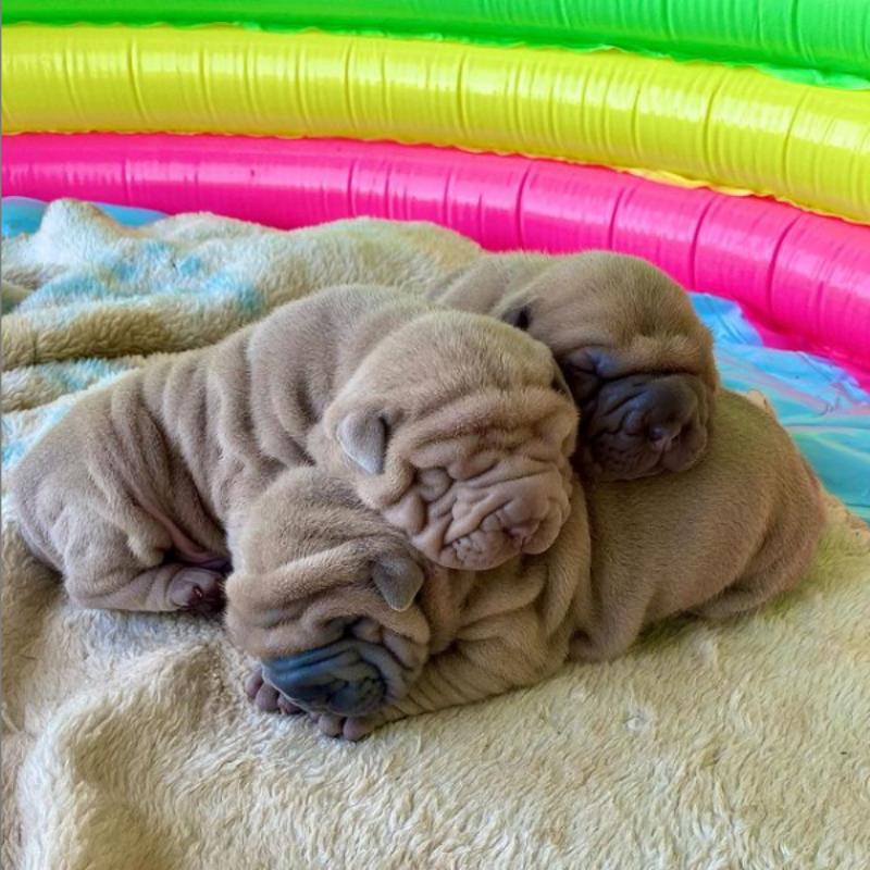 Pies Harvey i jego bracia