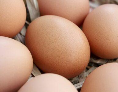 Jaja wychodzą na prostą