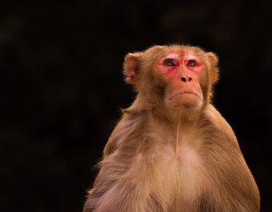 Naukowcy: Nie tylko człowiek świadomie postrzega to, co widzi. Jedno...