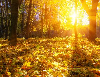 To koniec lata! 22 września pierwszy dzień astronomicznej jesieni