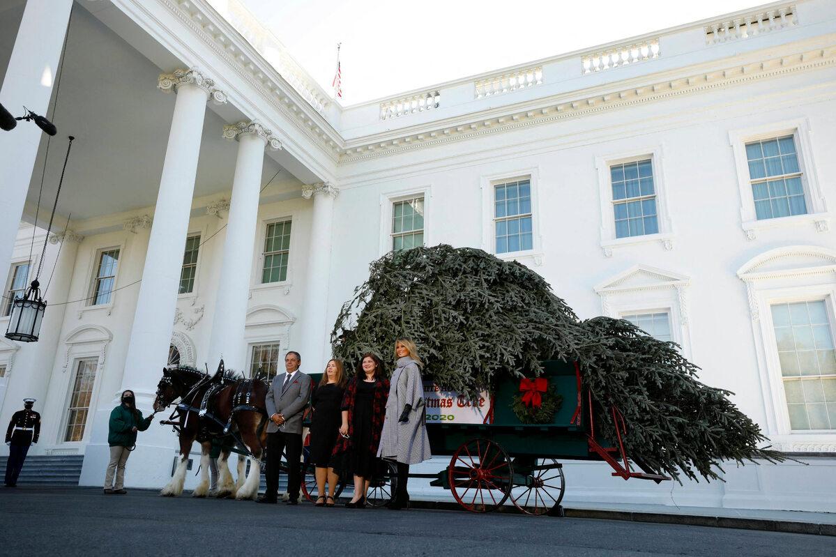 Melania Trump odebrała choinkę