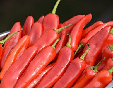 Papryczki chilli szturmem podbijają świat medycyny. Dlaczego?