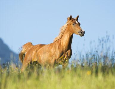 Trener koni nie przyjął nagrody od prezydenta. Odmówił z powodu zmian w...