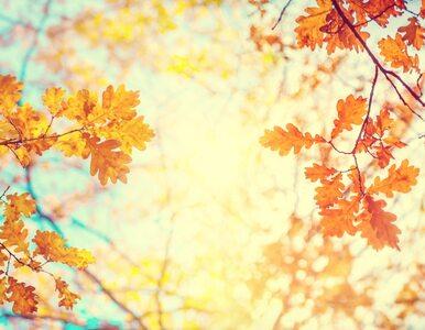 Powrót lata we wrześniu. Dużo słońca i wysokie temperatury