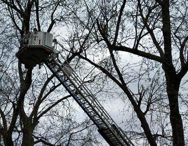 Obejrzał poradnik na YouTube i wspiął się na drzewo. Uratowali go strażacy
