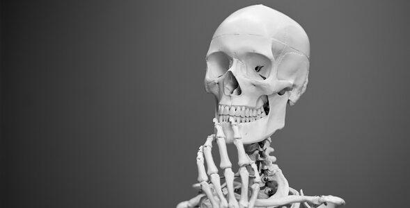 Jak dobrze znasz anatomię człowieka?