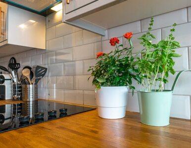 Szefowie kuchni radzą. Oto 6 sprytnych pomysłów na przechowywanie...