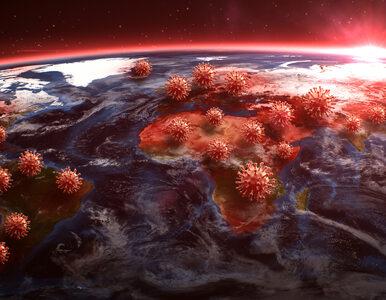 Ile ważą wszystkie koronawirusy na świecie? Zaskakujące wyniki...