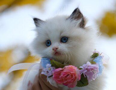 Dlaczego rozczulają nas słodkie kotki i małe stópki? Nauka ma wyjaśnienie