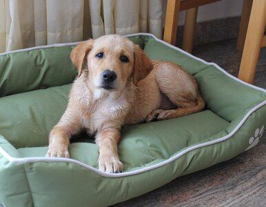 Jak obliczyć wiek psa? Mnożenie przez siedem to mit