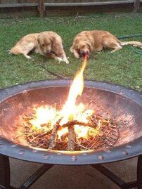 Psy, które mają nadnaturalne moce!