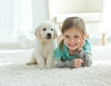 Dzieciństwo spędzone z psem a ryzyko rozwoju schizofrenii