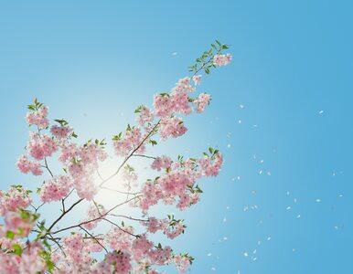 Wiosenne przysłowia i powiedzenia. Potrafisz dokończyć?